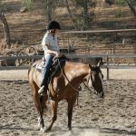 The Cost of Horseback Riding Lessons in San Diego
