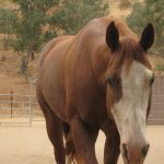 Horseback Riding in San Diego – How to Meet a Horse