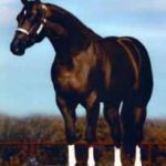 American Quarter Horse- fun facts about great riding horses in San Diego