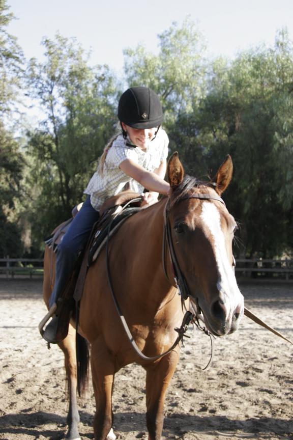 How to pet a horse - Salisbury Farms